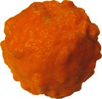 Stamps Stamps Food Fruit Orange Seville-1